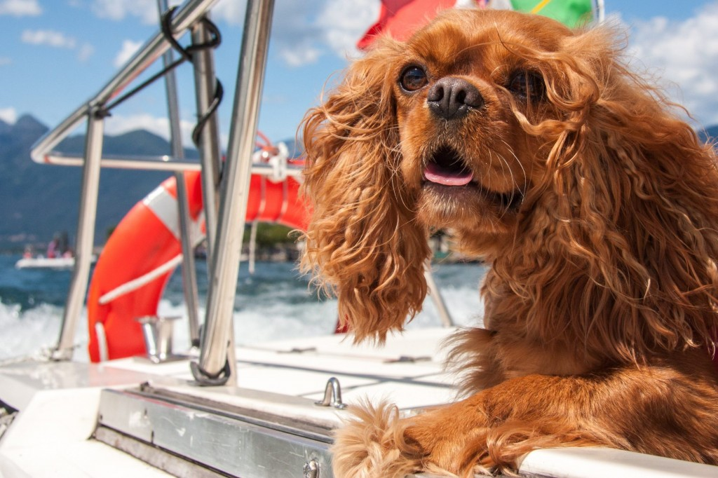 Important Safety Tips for Going Boating With Your Dog